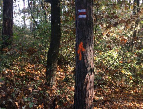 Oranžové šipky v lese